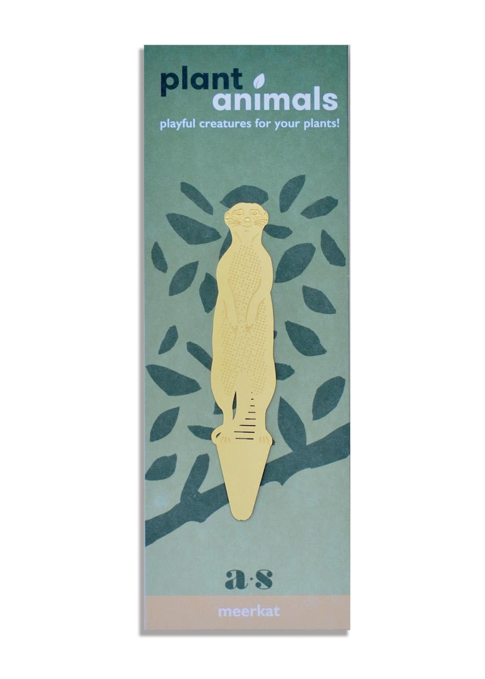 A.S Plant Animal STOKSTAARTJE meerkat