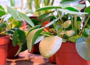 Planten, Potten en Vazen