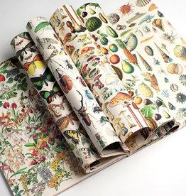 Pepin Press Boek met cadeaupapier NATURAL HISTORY