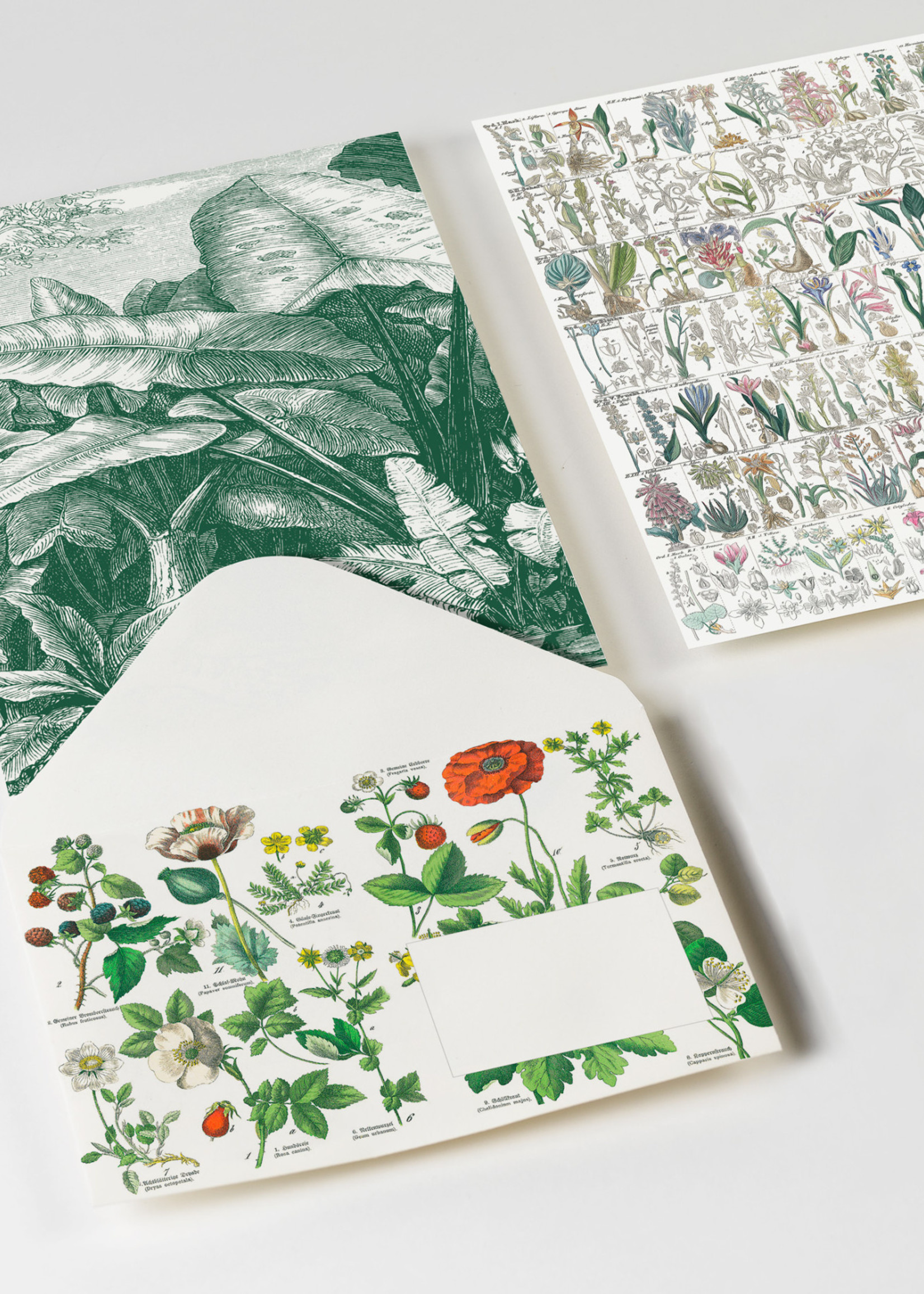 Pepin Press Enveloppen set van 20 stuks BOTANICAL