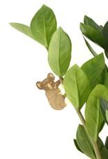 A.S Plant Animal KOALA