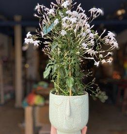MICA Plant pot GEZICHTJE groen 14cm