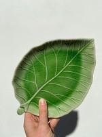 Asiatides Schaal in de vorm van een blad Groen 17 cm