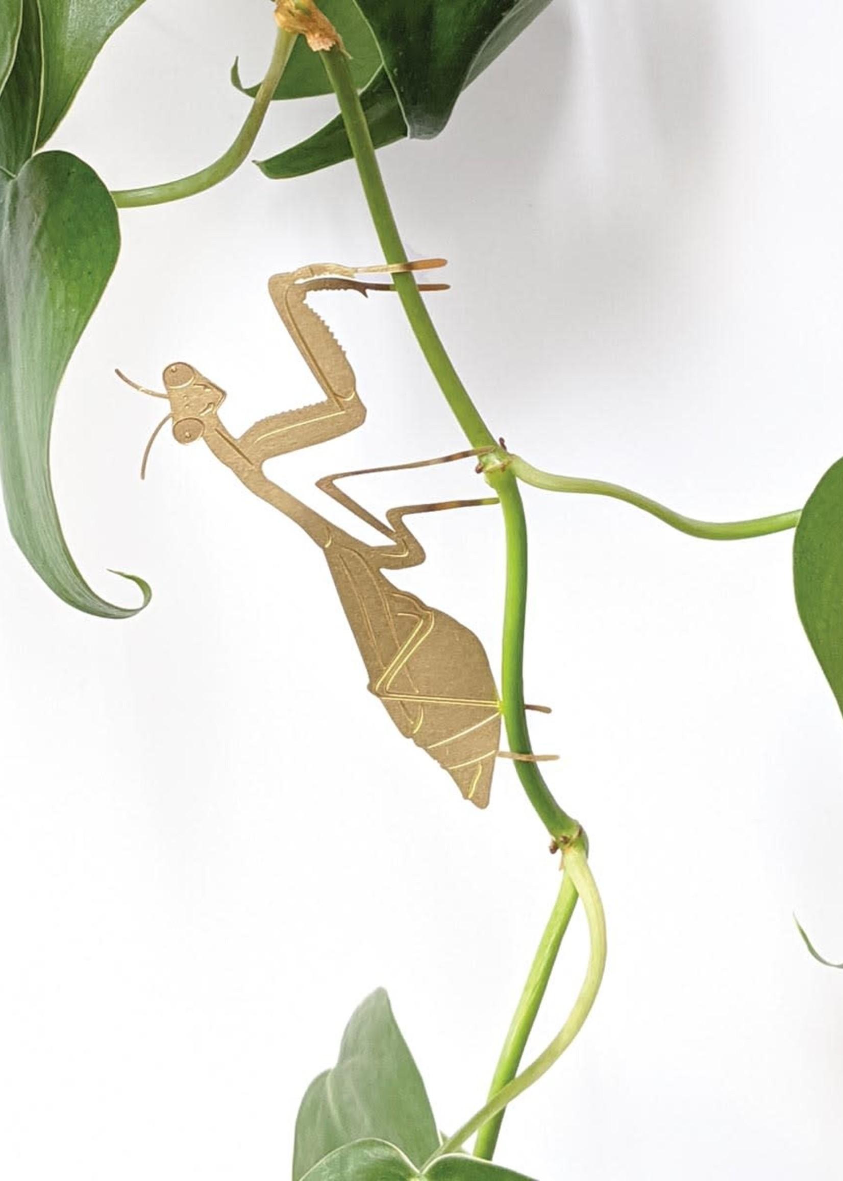 A.S Plant Animal BIDSPRINKHAAN Praying mantis