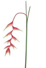 MICA Zijden bloemen HELICONIA