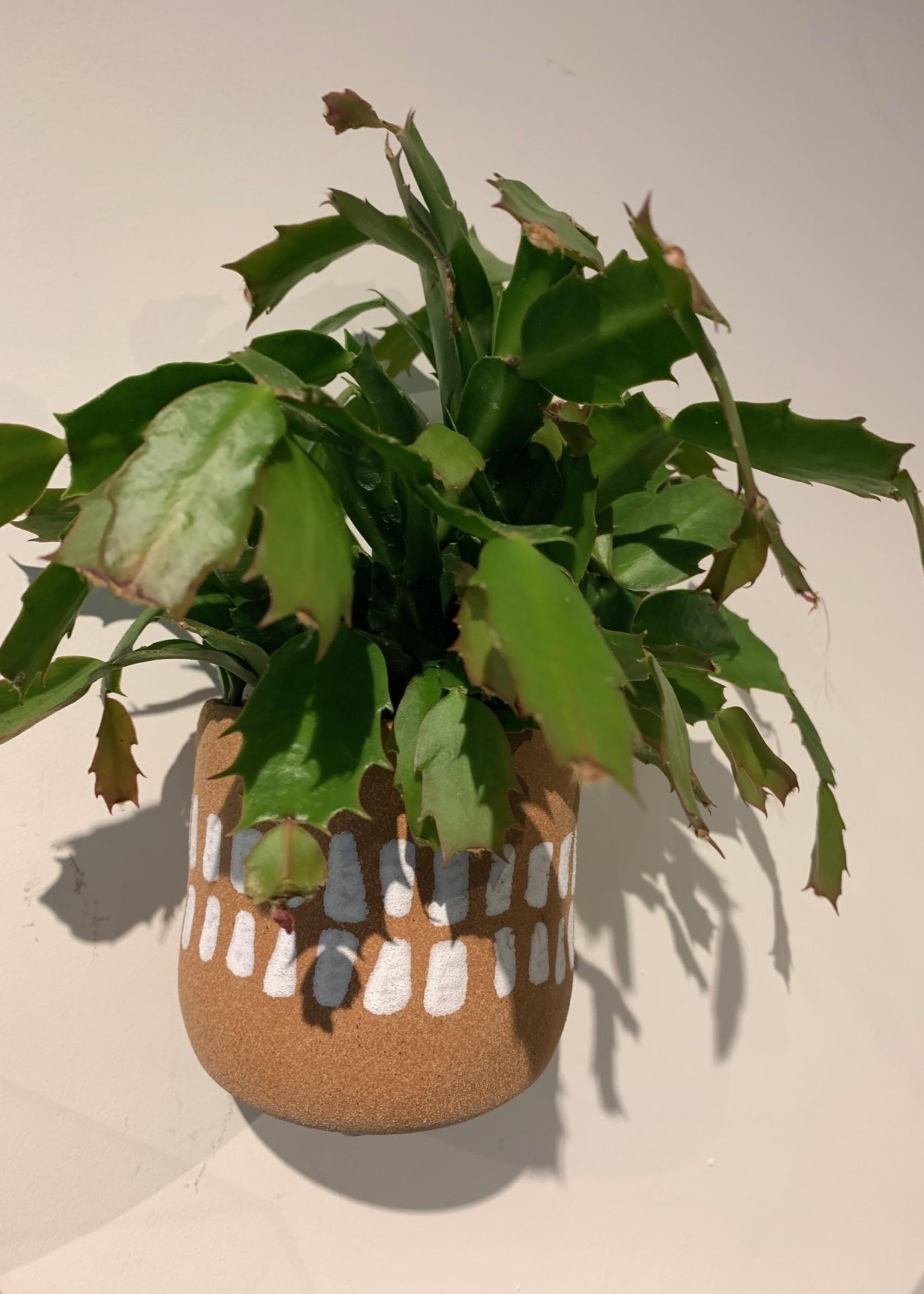 Lisa Angel Plant potje voor aan de muur TERRACOTTA