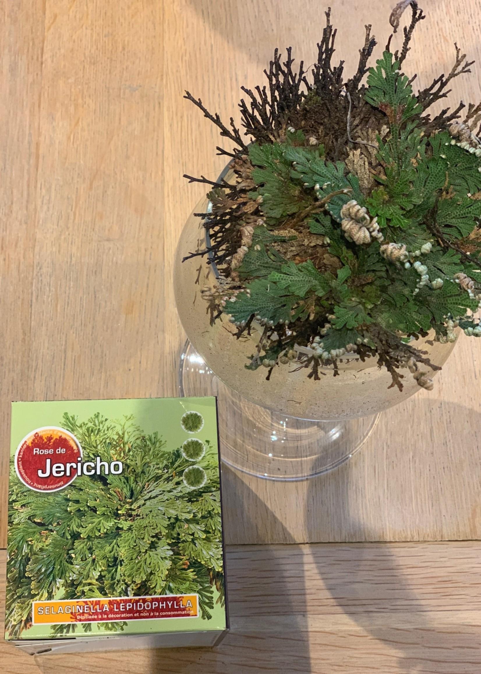 Roos van Jericho