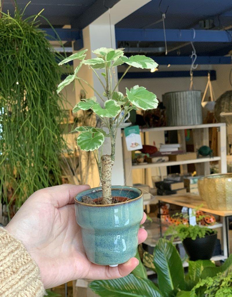 MICA Plant pot mini met rand  PETROL