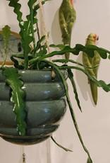 Wauw Plant pot hang bubbel BLAUW 14 cm