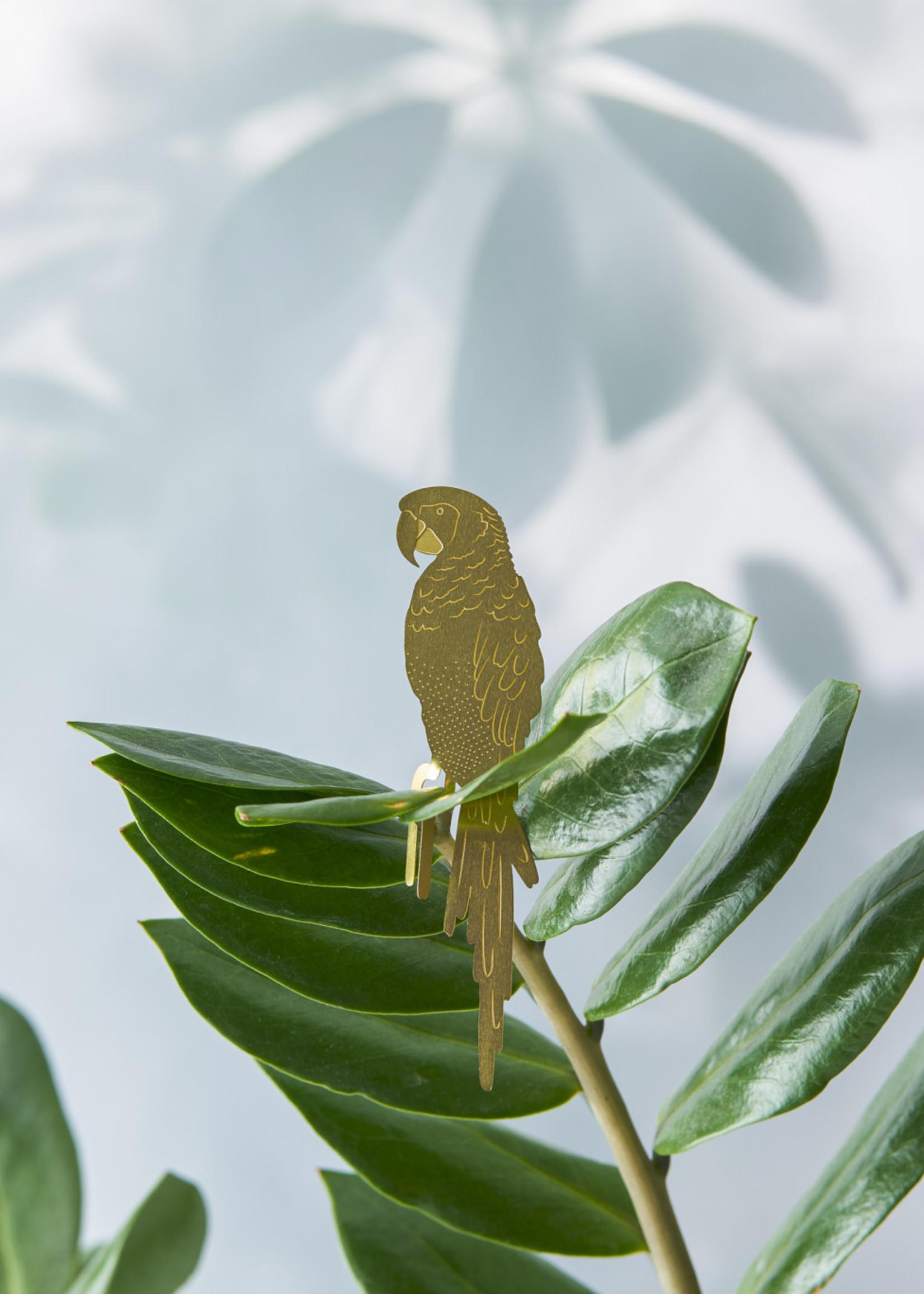 A.S Plant Animal PAPEGAAI parrot