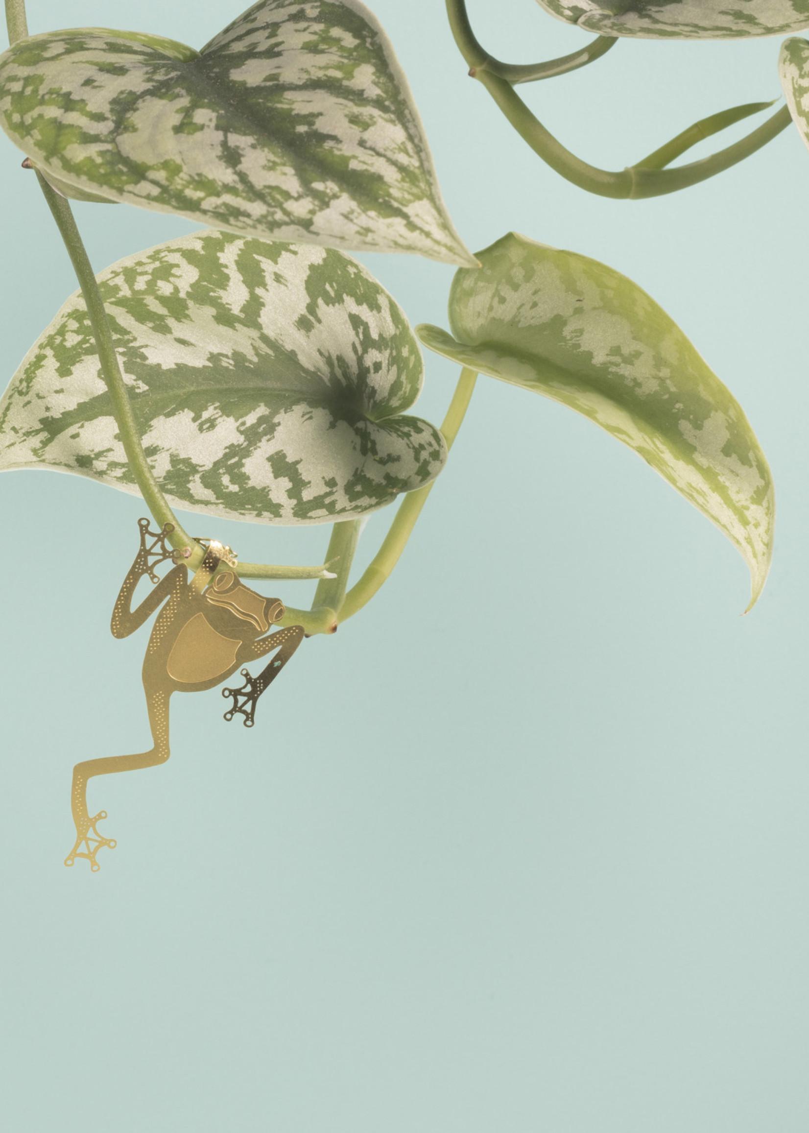 A.S Plant Animal KIKKER tree frog