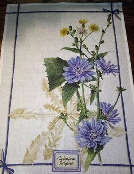 Wild chicory tea towel