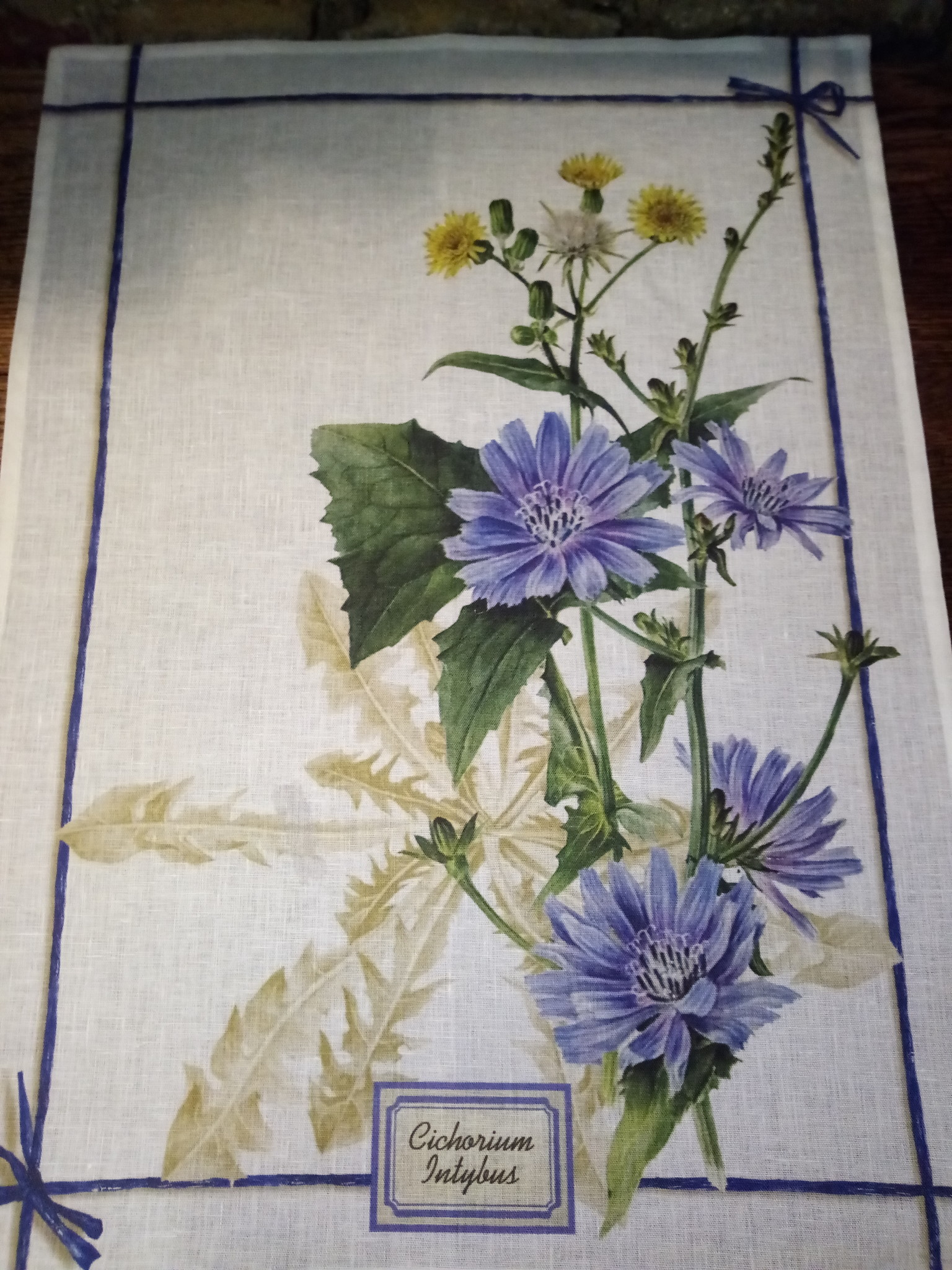 Wild chicory tea towel