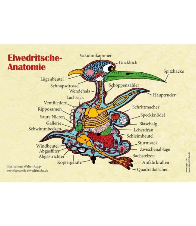 Poster Elwedritsche Anatomie
