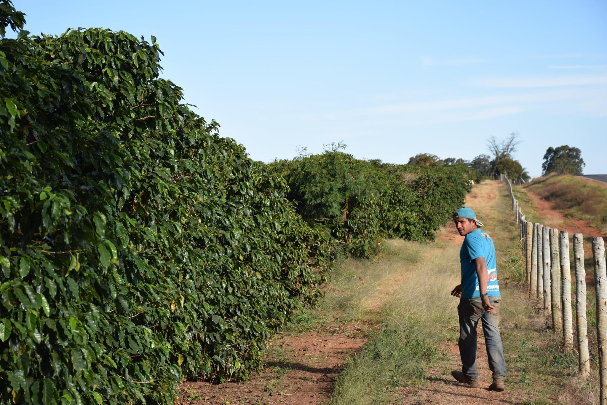 Eerste rechtstreekse aankoop bij lokale koffieboer in Cerrado Mineiro, Brazilië