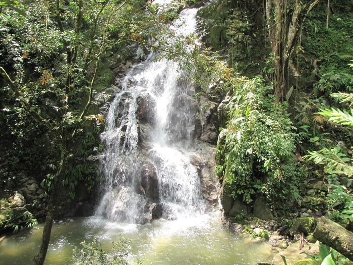 Minca - het vlinder en vogelparadijs van Colombia