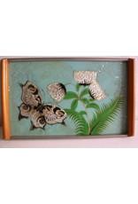Vlinderblad  reseda groen parelmoer vlinder en distel