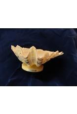 Prachtige grote Nautilus en Hipopus Macula schelp