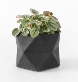 HOUSE RACCOON Palua Plantenpot – Medium – Zwart