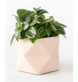 HOUSE RACCOON Palua Plantenpot – Medium – Roze