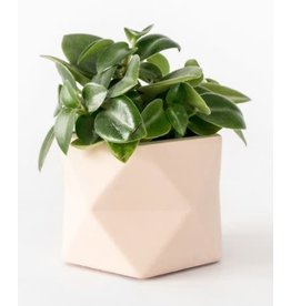 HOUSE RACCOON Palua Plantenpot – Medium – Roze