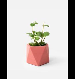 HOUSE RACCOON Mare planter - Medium - Pomegranate d.5,5cm