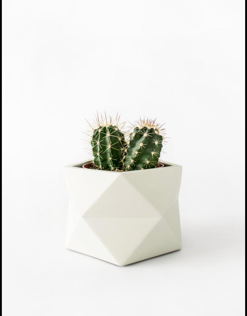 HOUSE RACCOON Palua Plantenpot – Large – silver green