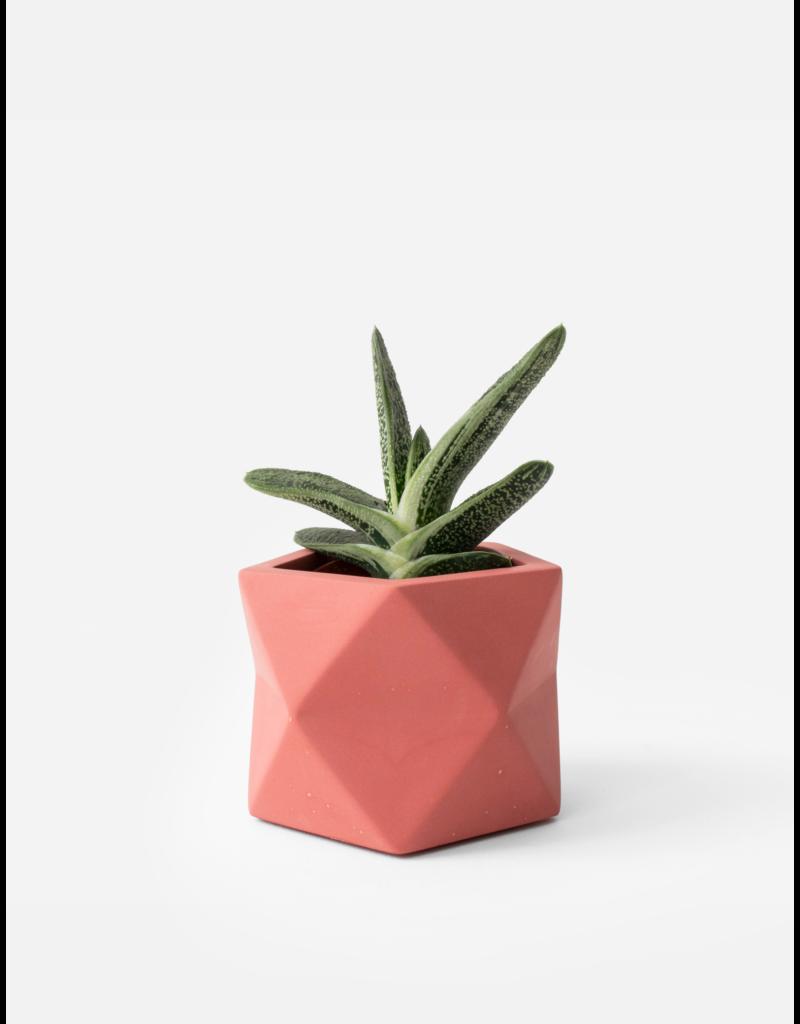 HOUSE RACCOON Palua Plantenpot – Medium – Pomegranate