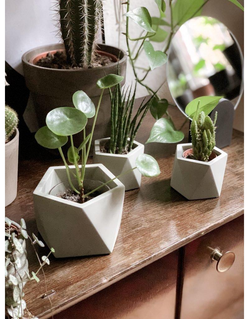 HOUSE RACCOON Mare Plantenpot – Large – silver green