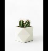 HOUSE RACCOON Palua Plantenpot – Medium – Silver green
