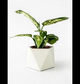 HOUSE RACCOON Mare planter - Medium - Silver green d.5,5cm