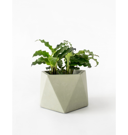 HOUSE RACCOON Mare Plantenpot – Large – Olive green