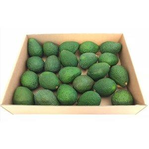 Avocado hass 22/24 pieces