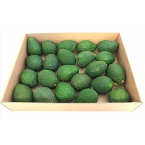 Avocado hass 22/24 Stück