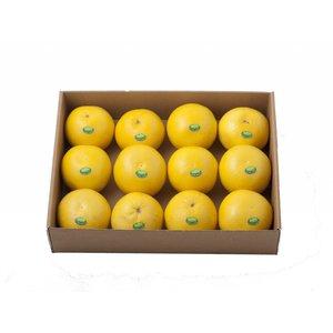 Jaffa White grapefruit 12St
