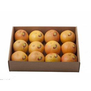 Jaffa Rote Grapefruit 12St.