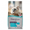 Burgess Burgess Neutered Cat