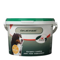 PrimeVal Gelatinierter Hund