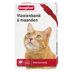 Flohhalsband 6mnd Katze rot