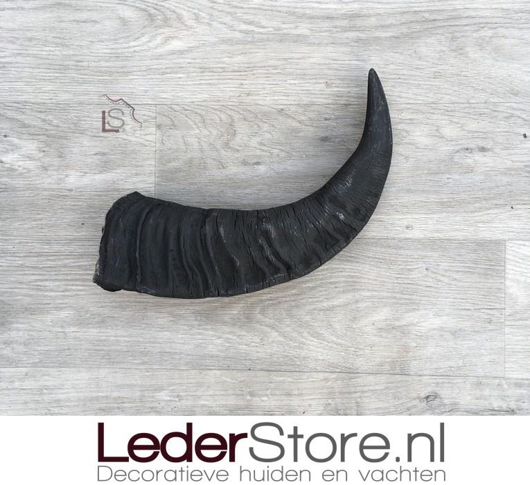 Water Buffalo horn 45cm