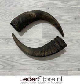 Waterbuffel hoorns 40cm