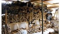 Waarom bamboe perfect is om fietsen van te maken