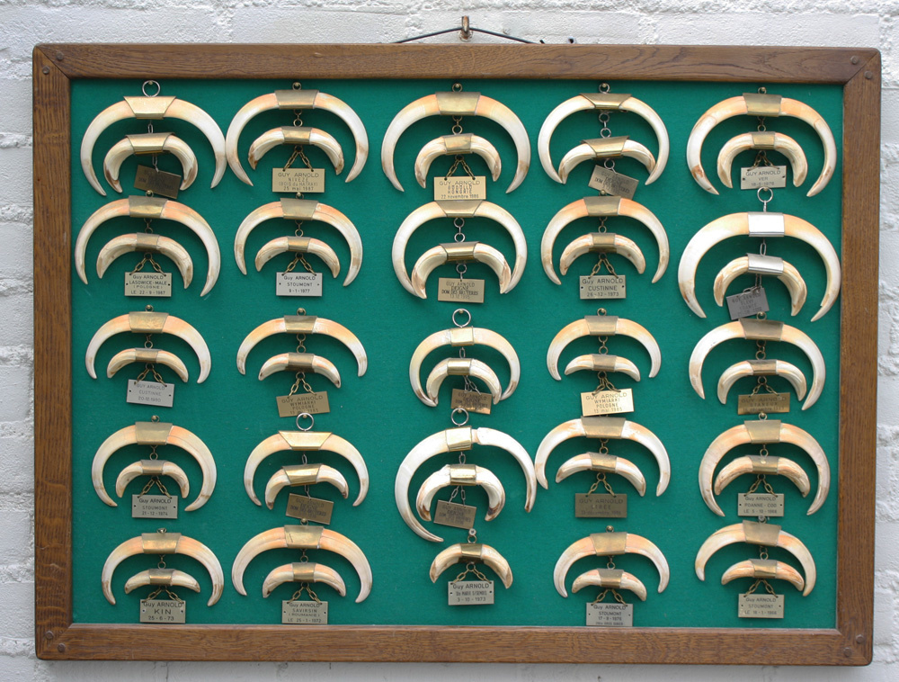 Groot tableau met 25 sets EVERZWIJN TANDEN - voorzien van datum & plaats