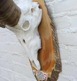 Grote ALPEN STEENBOK (Capra ibex) op schild