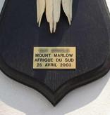 Schedel MOUNTAIN REEDBUCK op zwart houten schild