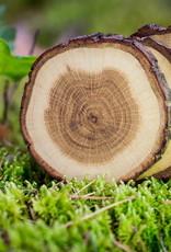TREE4TEA eikenhouten onderzetter