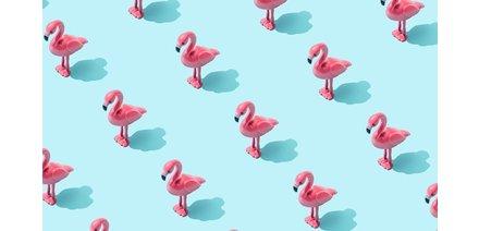 Heel veel flamingo's
