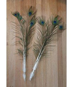 Pauwenveren 3 stuks  60-70 cm