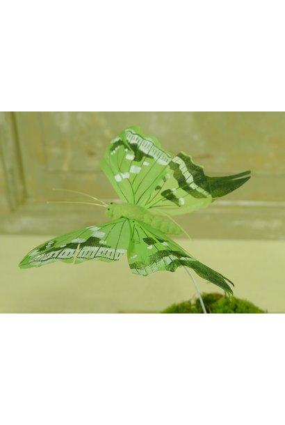 schmetterling grun