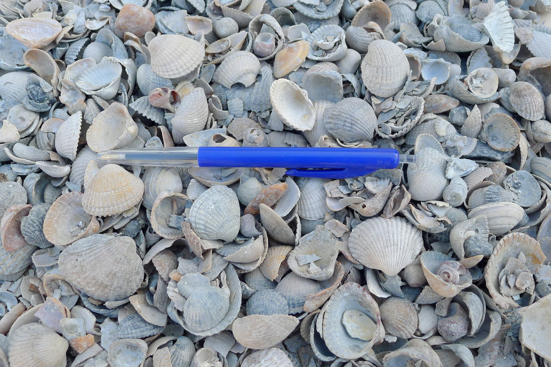 home dec shells dutch mix 15 kg-2
